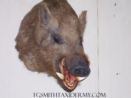 tgsmithtaxidermy001.jpg